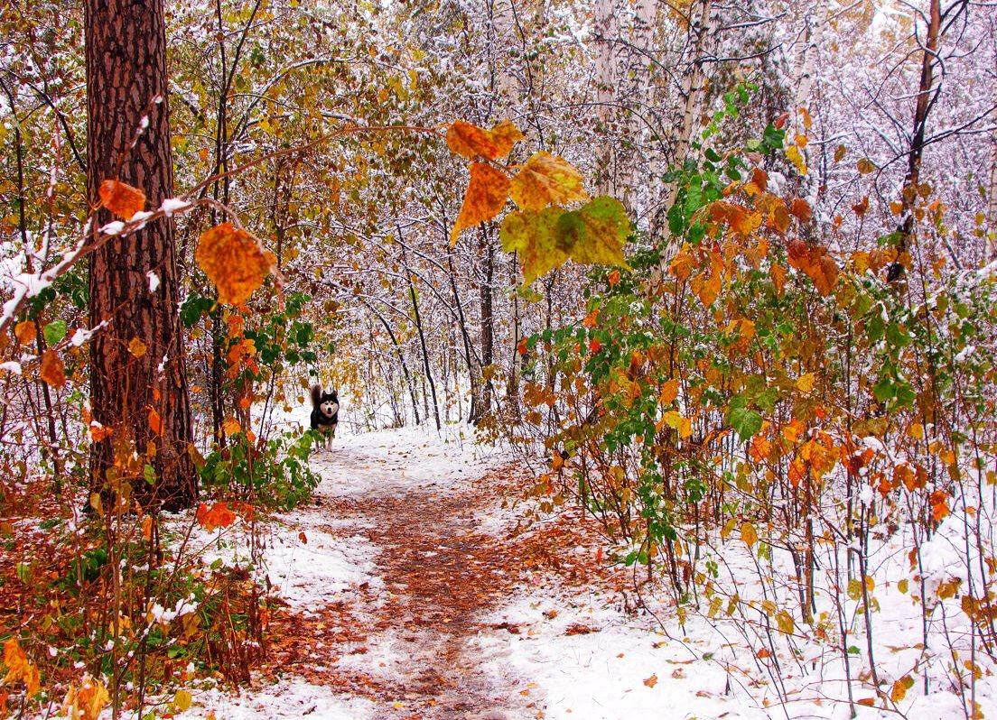Всероссийский конкурс творческих работ «У природы нет плохой погоды»