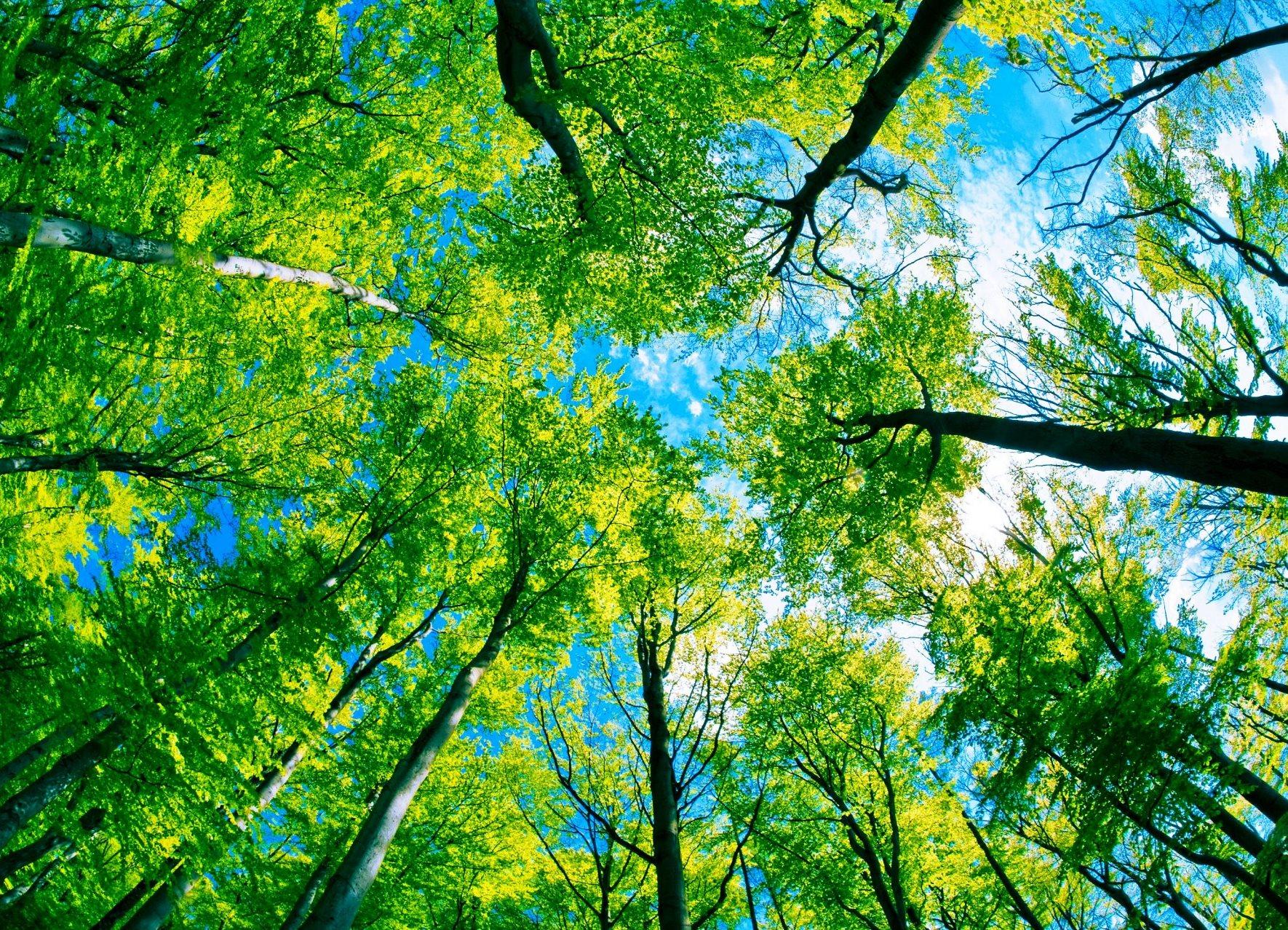 Всероссийский конкурс творческих работ «Чистое лето»:  с заботой о природе»