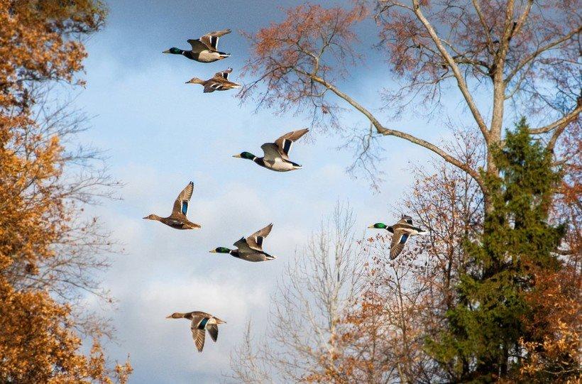 Всероссийский конкурс творческих работ «Улетают птицы в теплые края»